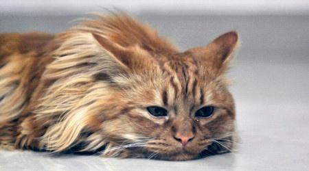 apathetic cat.jpg