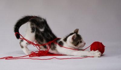 cat yarn.jpg